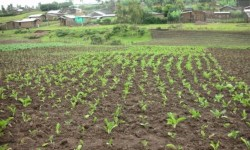 Proyecto Agricola Hossana