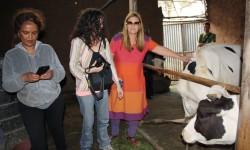 viendo a las vacas
