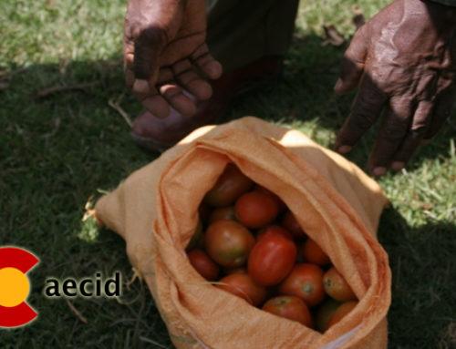 Proyecto de desarrollo agrícola en el pueblo de Hosanna, en Etiopía.